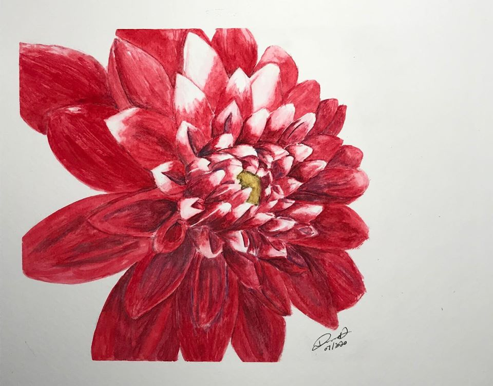This art piece depicts a dahlia flower. The dahlia has pinkish-red petals, with some having white at the tips. The center of the flower is a golden yellow.